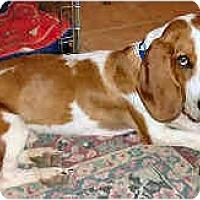 Adopt A Pet :: Finnegan - Phoenix, AZ