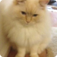 Adopt A Pet :: Wesley - purebred - Ennis, TX