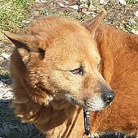 Adopt A Pet :: KAELA - COVENTRY, CT