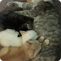 Adopt A Pet :: Mama Cass - Fairborn, OH