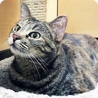 Adopt A Pet :: Thalia - Irvine, CA