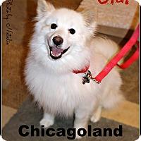 Adopt A Pet :: Olaf - Elmhurst, IL