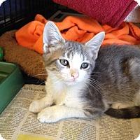 Adopt A Pet :: Austin - Island Park, NY