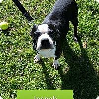 Adopt A Pet :: Joseph/Joey - Weatherford, TX