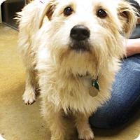 Adopt A Pet :: Rocket - Redding, CA