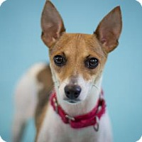 Adopt A Pet :: Sunflower - Bradenton, FL