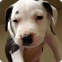 Adopt A Pet :: Boss - Broken Arrow, OK