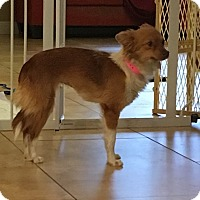 Adopt A Pet :: Mimi 1 - Las Vegas, NV