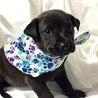 Adopt A Pet :: Seeger - Trenton, NJ