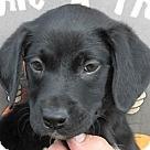 Adopt A Pet :: Jodie