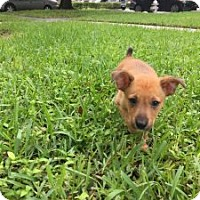 Adopt A Pet :: Marco - Pompano beach, FL