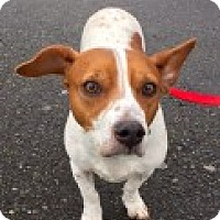 Adopt A Pet :: Izzy - Bellingham, WA