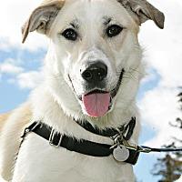 Adopt A Pet :: Aveva - Bellingham, WA