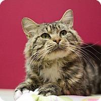 Adopt A Pet :: Guapo - Grayslake, IL