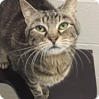 Adopt A Pet :: Max 5381 - Joplin, MO