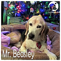 Adopt A Pet :: Mr Beasley - Pittsburgh, PA