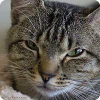 Adopt A Pet :: FANEEN - Houston, TX