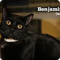 Adopt A Pet :: Benjamin - Springfield, PA