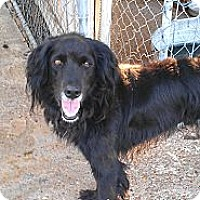 Adopt A Pet :: Joey - Eddy, TX