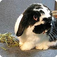 Adopt A Pet :: Louella - Newport, DE