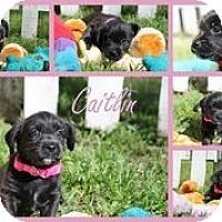 Adopt A Pet :: Caitlin - Austin, TX