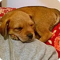 Adopt A Pet :: Bud - Ranger, TX