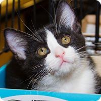 Adopt A Pet :: Toby - Irvine, CA