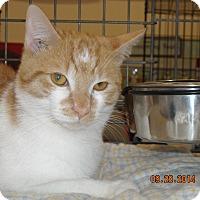 Adopt A Pet :: Kevin - Riverside, RI