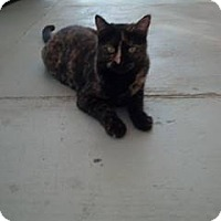 Adopt A Pet :: Pistol Annie - Calimesa, CA