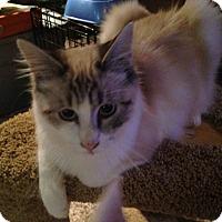 Adopt A Pet :: MontyCore - Kelso/Longview, WA