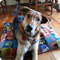 Adopt A Pet :: Jenna - Saskatoon, SK