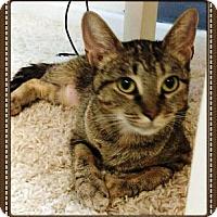 Adopt A Pet :: PARI - Ridgewood, NY