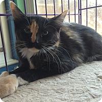 Adopt A Pet :: Paisley - San Ramon, CA