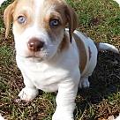 Adopt A Pet :: Babes Danny