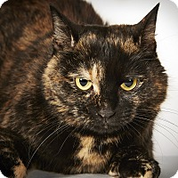 Domestic Shorthair Cat for adoption in New York, New York - Thumbelina