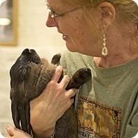 Adopt A Pet :: Popover - Chicago, IL