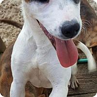 Carolina Dog/Shepherd (Unknown Type) Mix Puppy for adoption in Dayton, Maryland - Shiya