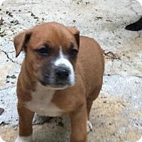 Adopt A Pet :: Malcolm - Charlotte, NC