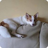 Adopt A Pet :: Jasper (Adoption pending) - Pataskala, OH