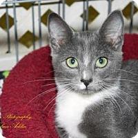 Adopt A Pet :: Maurice - Norman, OK