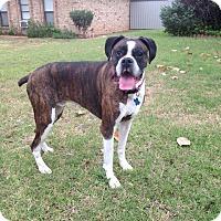Adopt A Pet :: John Gibbens - Austin, TX