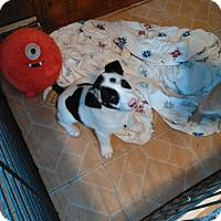 Adopt A Pet :: 3boys & 2girls - Denver, IN