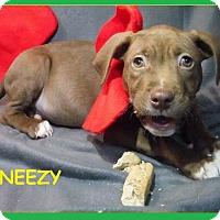Adopt A Pet :: Sneezy - Batesville, AR