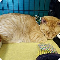 Adopt A Pet :: Tansy - Avon, OH