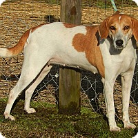 Hound (Unknown Type) Mix Dog for adoption in Newport, North Carolina - Sally