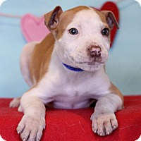 Adopt A Pet :: Howser - Waldorf, MD