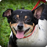 Adopt A Pet :: Buddy - DuQuoin, IL