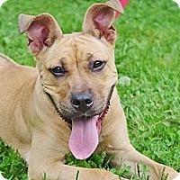 Adopt A Pet :: Sandy - Reisterstown, MD