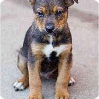 Adopt A Pet :: Evan - Portland, OR