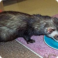 Adopt A Pet :: Jack - Buxton, ME